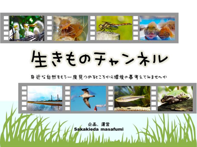 生きものチャンネル表紙修正(ブログ)