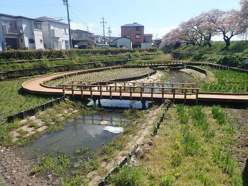 堀川花菖蒲園全体のようす