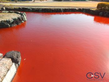 施工前の真っ赤な池