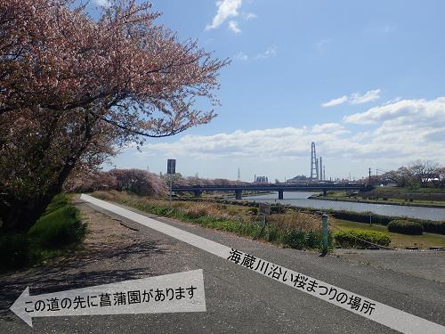 海蔵川沿いでお花見が行われる堤防の道からのアクセス