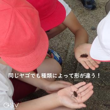 コオニヤンマとコヤマトンボはそれぞれ形が違うと、手のひらで見比べる小学生