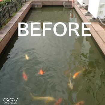 施工前の池のようす