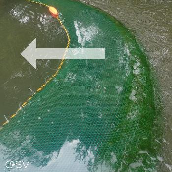 網にかかった緑色のアオミドロ